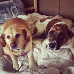 Zoey is having a sleepover with her new friend Valentine.…